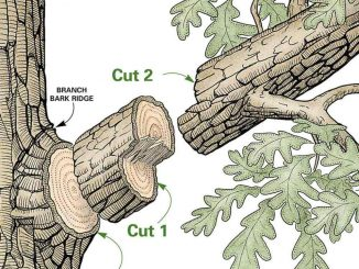 25-Tree Pruning Tips